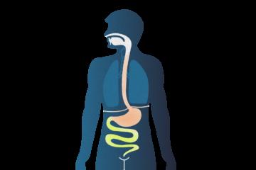 im DarmUrsachenBehandlungRisiken DarmUrsachenBehandlungRisiken Magensäure Magensäure im Magensäure im mNn08w